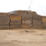 Hay for Biomass